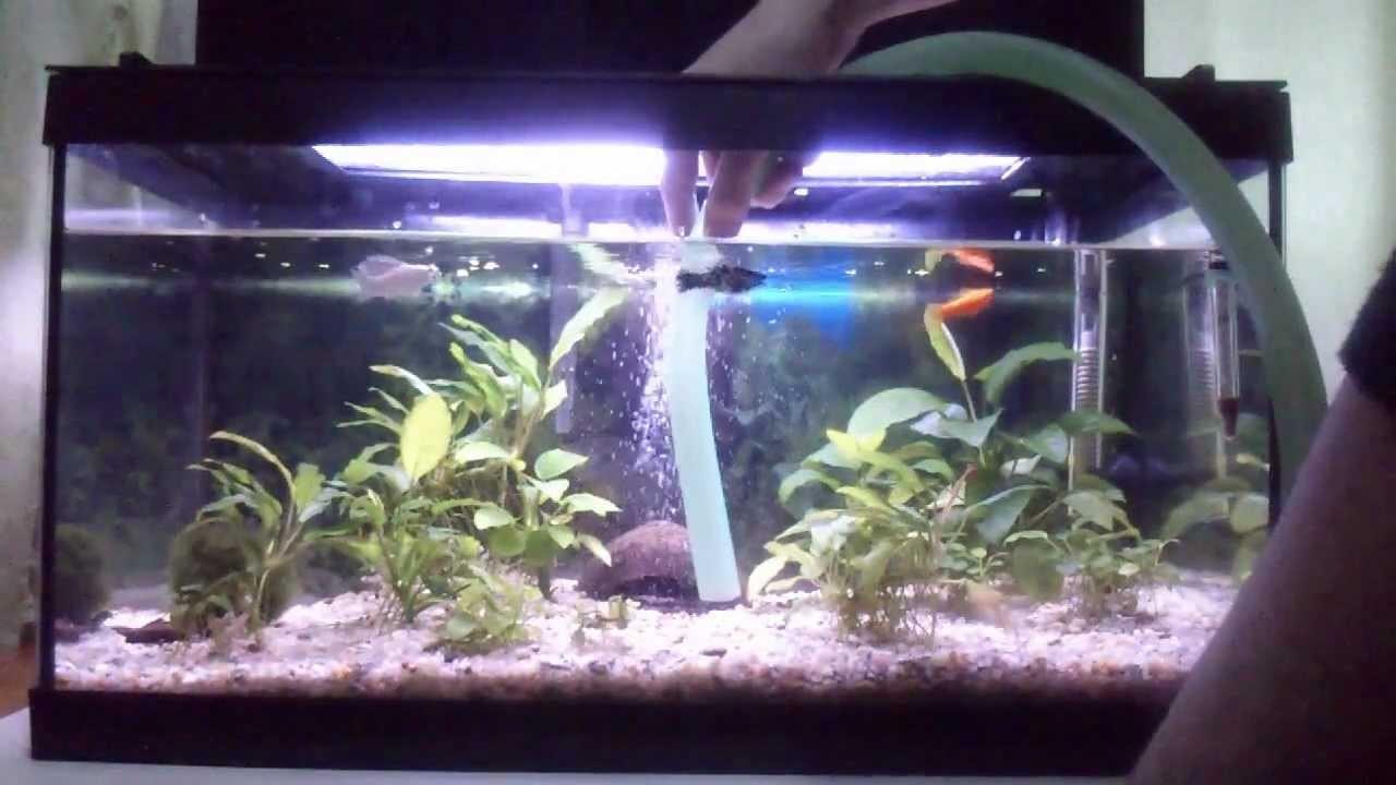 Mantenimiento Acuarios y peces